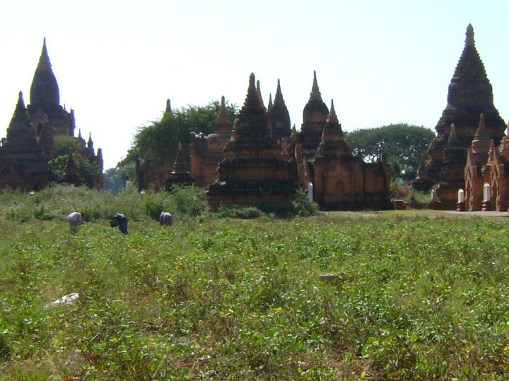 Farmers in Bagan